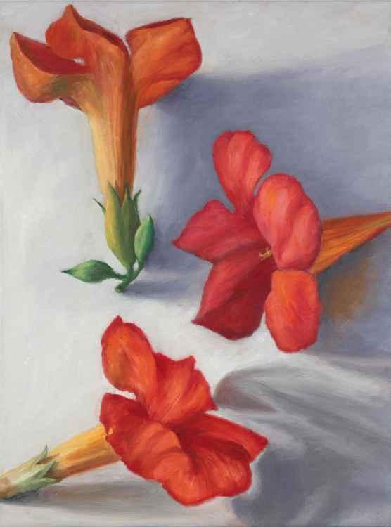 Trumpet Vine Flowers -