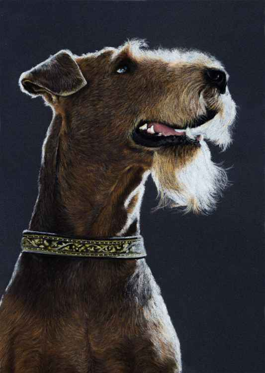 "Original pastel drawing ""Airedale"" -"