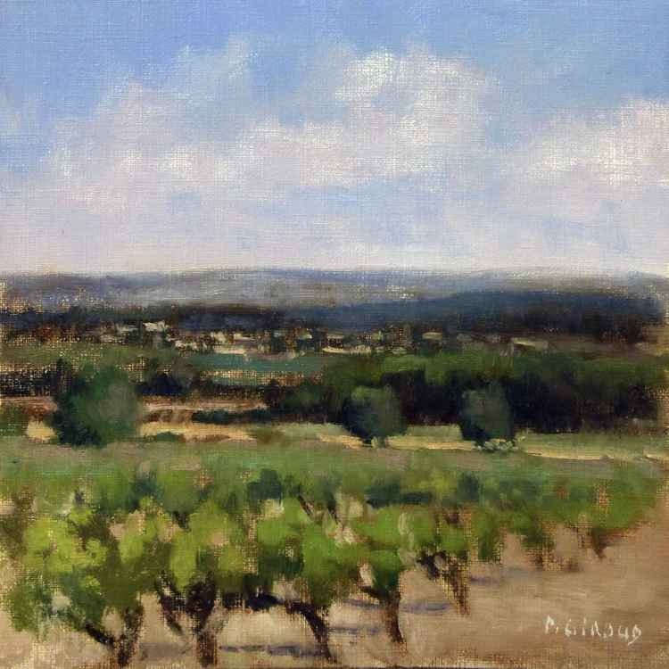 Vineyards in the Luberon
