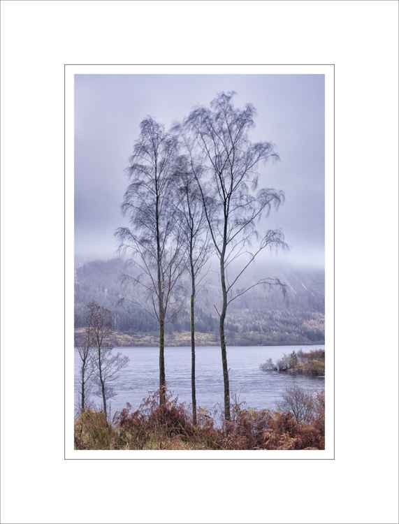 Thirlmere Tenderness -