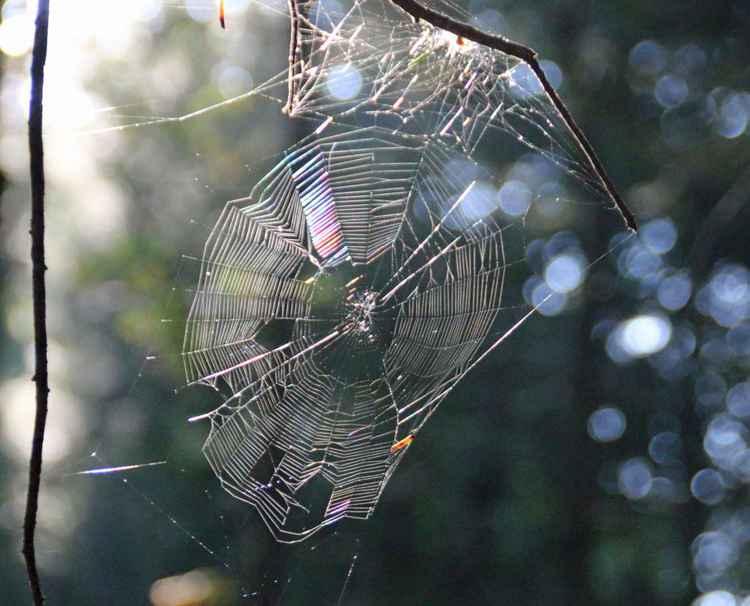 Sunlit spiderweb -