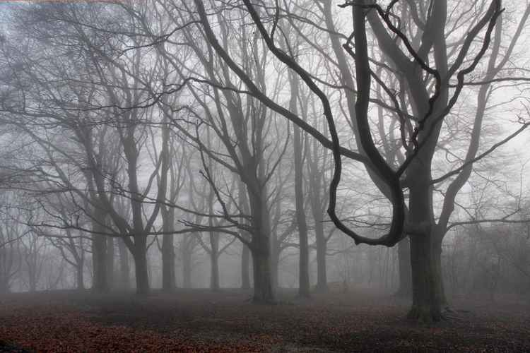 Foggy Day on Hampstead Heath London -