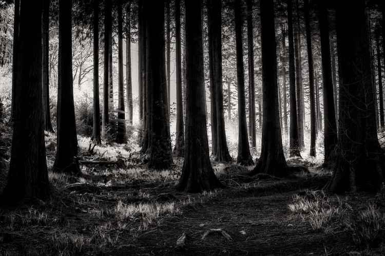 The dark dark wood