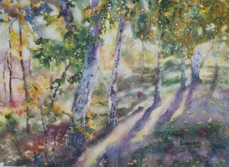 Birch Grove -