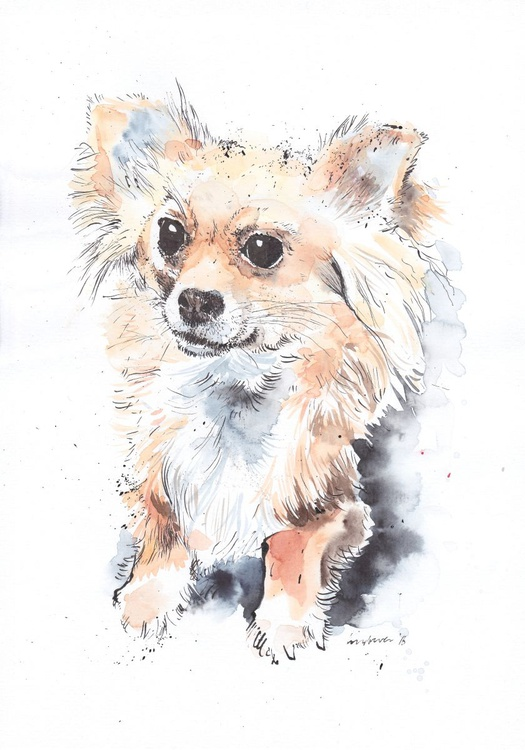 Long haired Chihuahua - Image 0