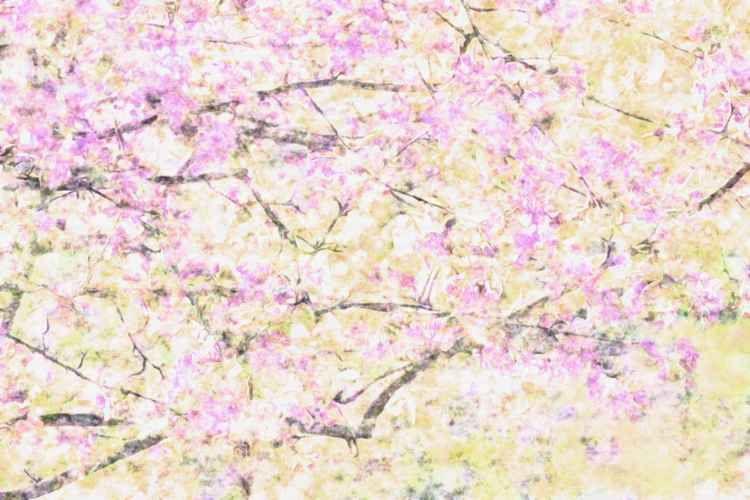 Branches with  blossoms -