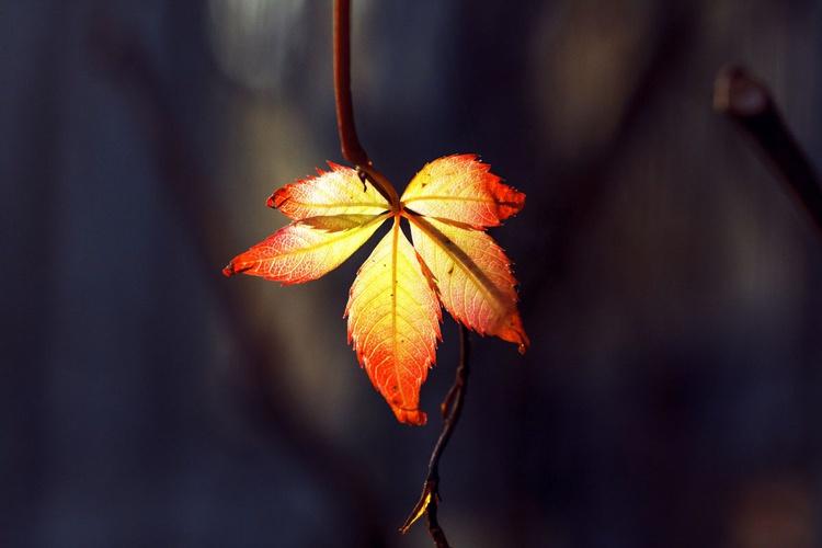 Sunligt on Leaves of Wild Grape, 2015 - Image 0