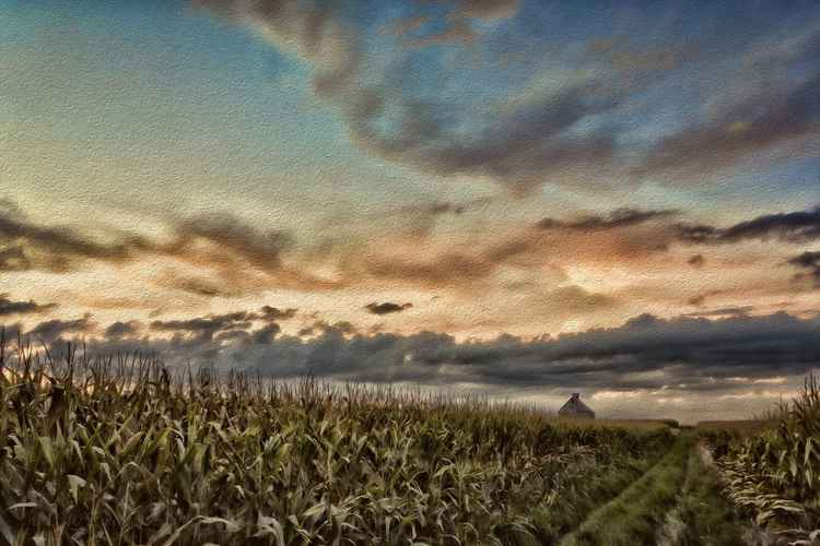 Prairie Corn Field under a Fall Sky -