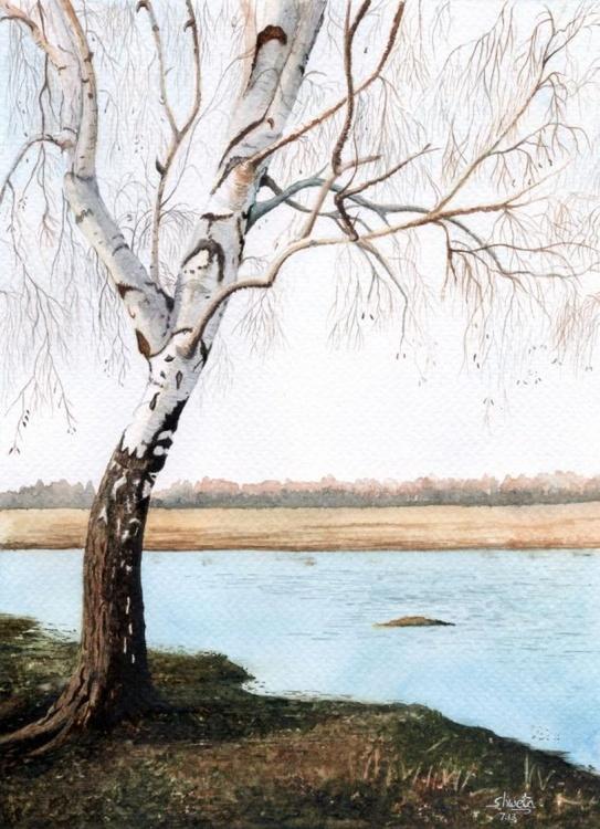 Birch Tree - Image 0