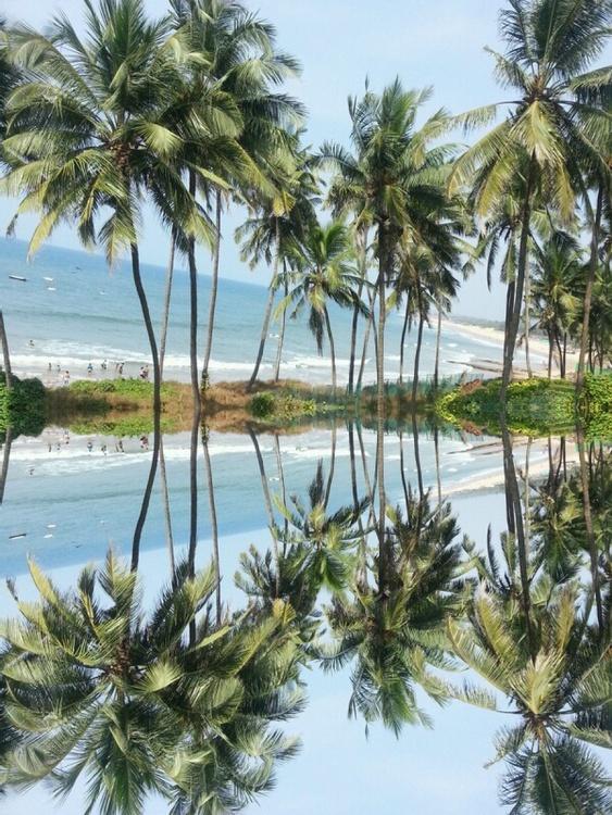 Beach Trees - Image 0