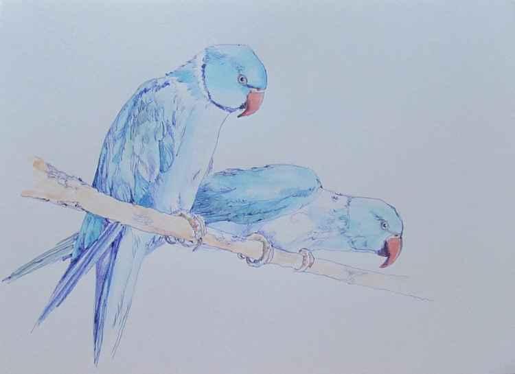 Two blue parrots -