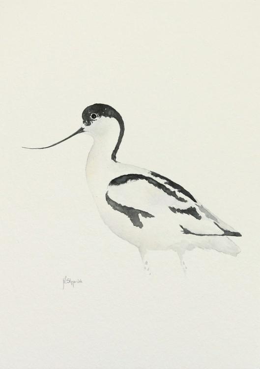The pied avocet, (Recurvirostra avosetta) - Image 0