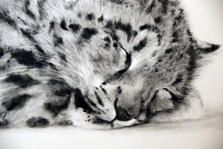 Goodnight Sweetheart (Snow Leopard cub) - Image 0