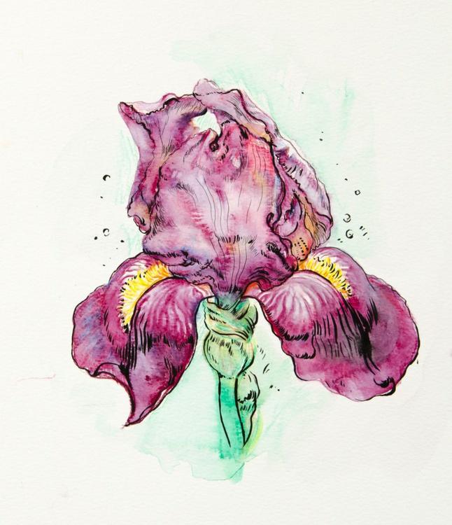 Iris. Watercolor pencil on paper - Image 0