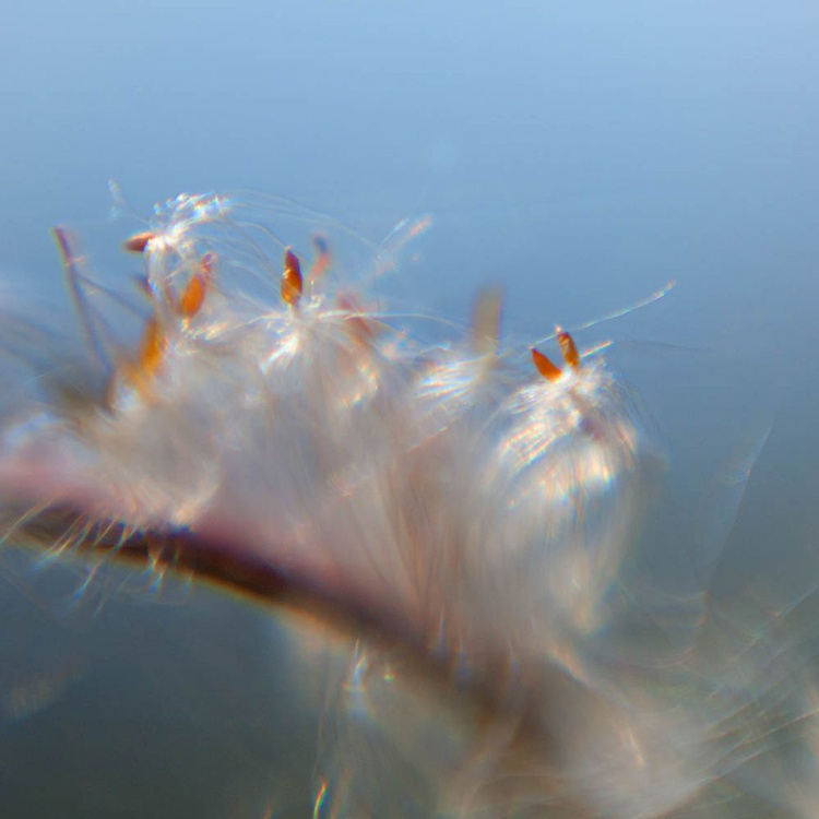 Fairy Ballet (Image 8)  . . . Stairway to Heaven - Image 0