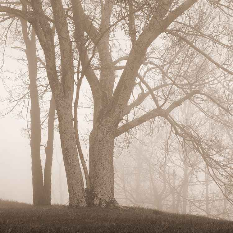 Forest in Fog 1 -