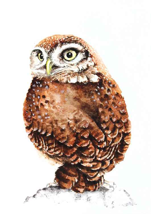 LITTLE OWL,  bird, birds, animals, wildlife watercolour painting -