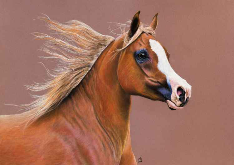 "Original pastel drawing ""Arabian Mare"""
