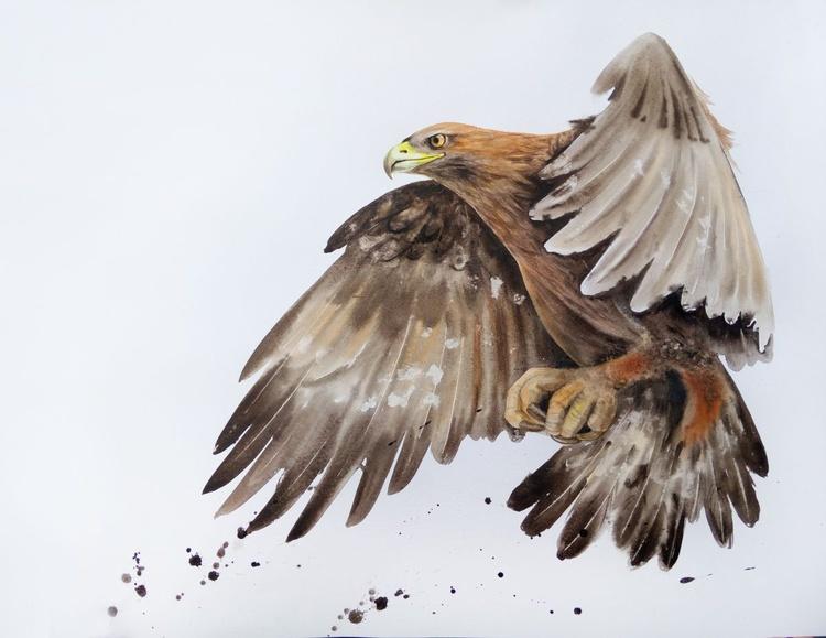 Golden Eagle in flight - Image 0