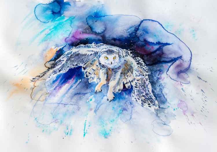 Snowy owl hunting -