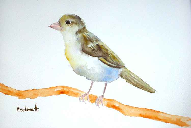 Watercolour bird sparrow -