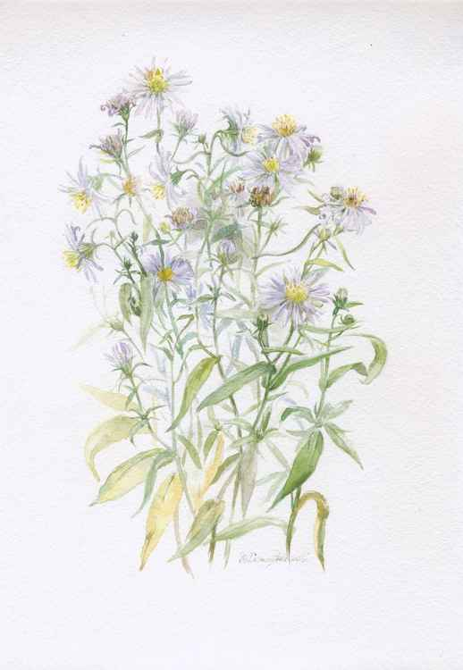 ORIGINAL WATERCOLOR Chrysanthemium (Chrysanthemum serotinum)