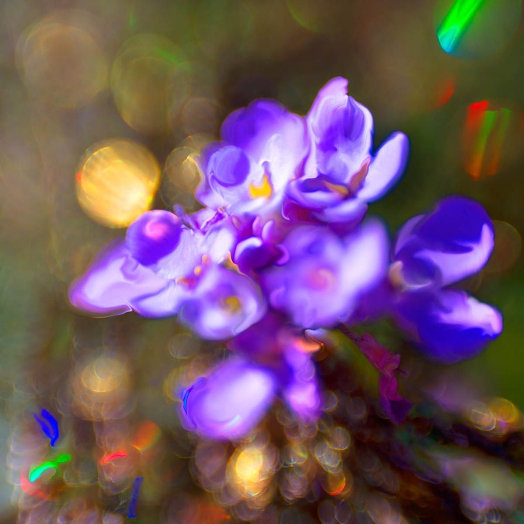 Sprites in the Enchanted Forest  -  Popping Candy Bloom - Image 0
