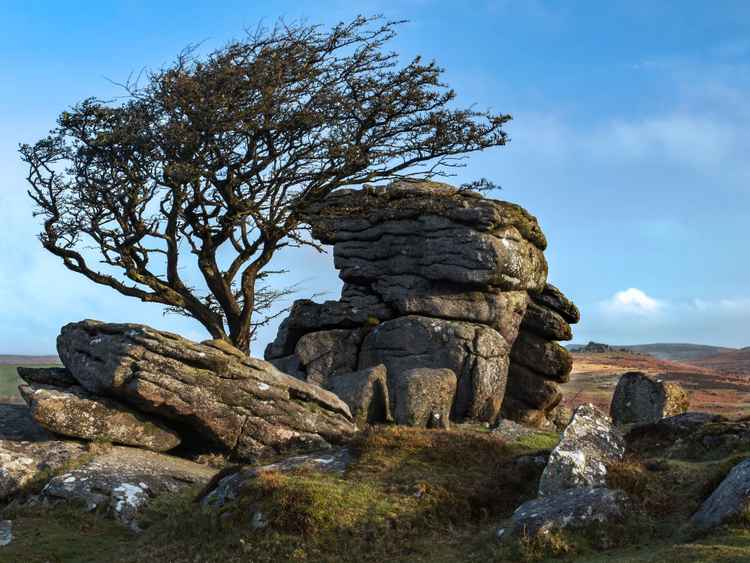 The Tree on Saddle Tor -