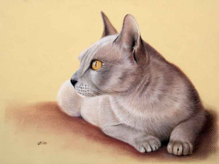 Original pastel drawing cat -