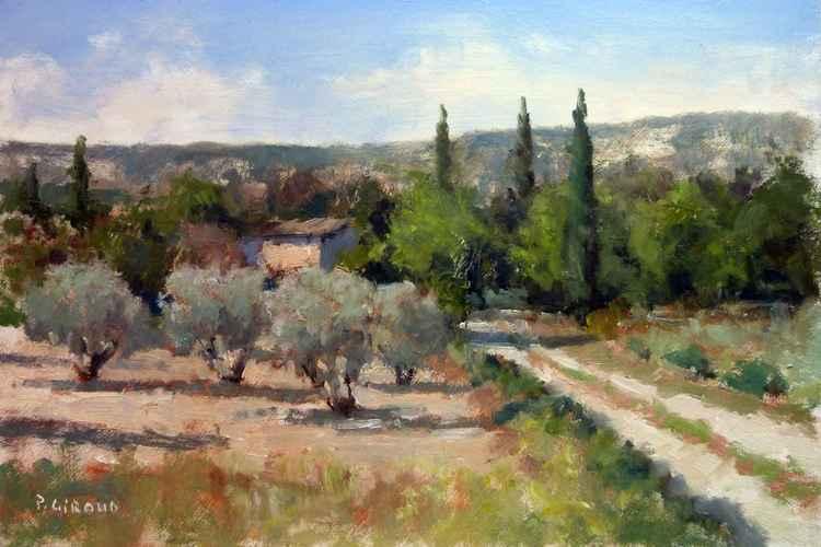Olive Trees near Lourmarin