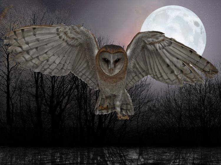 Silent Night - Image 0