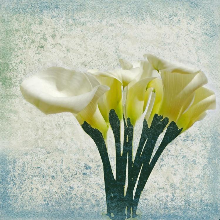 Calla Lily - Image 0