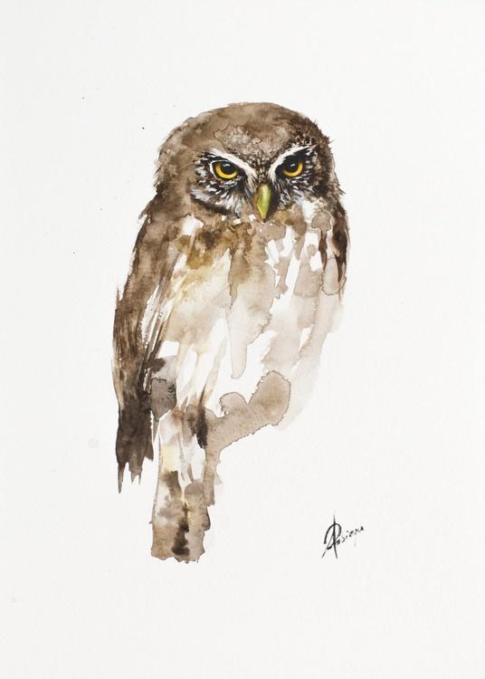 Eurasian Pygmy-Owl (Glaucidium passerinum) - Image 0