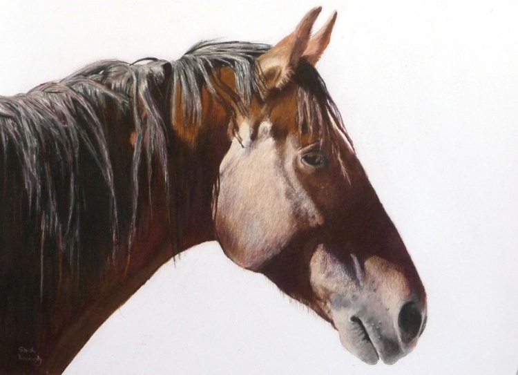 Mustang Spirit - Image 0