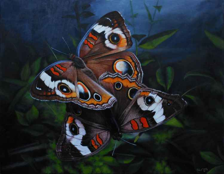 Two Butterflies -