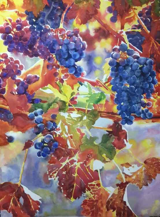 Blue grapes -