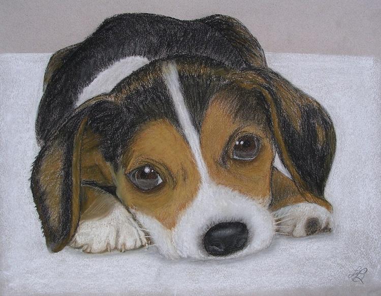 Beagle Puppy - Image 0