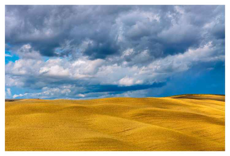 Golden Harvest / LIMITED EDITION 1 of 10 + 1 AP -