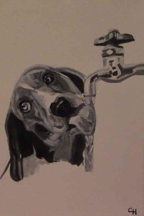 Thirsty Dog -
