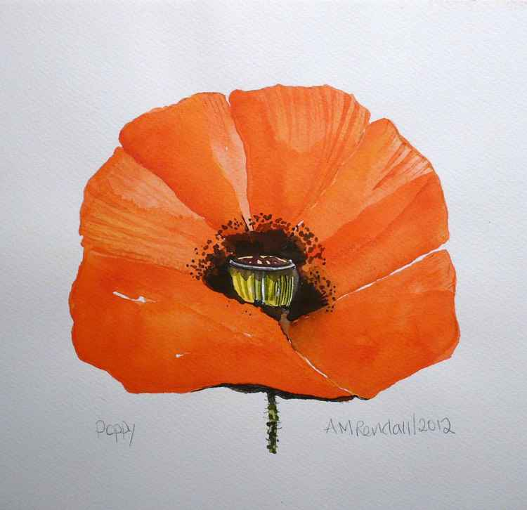 Red Poppy Head