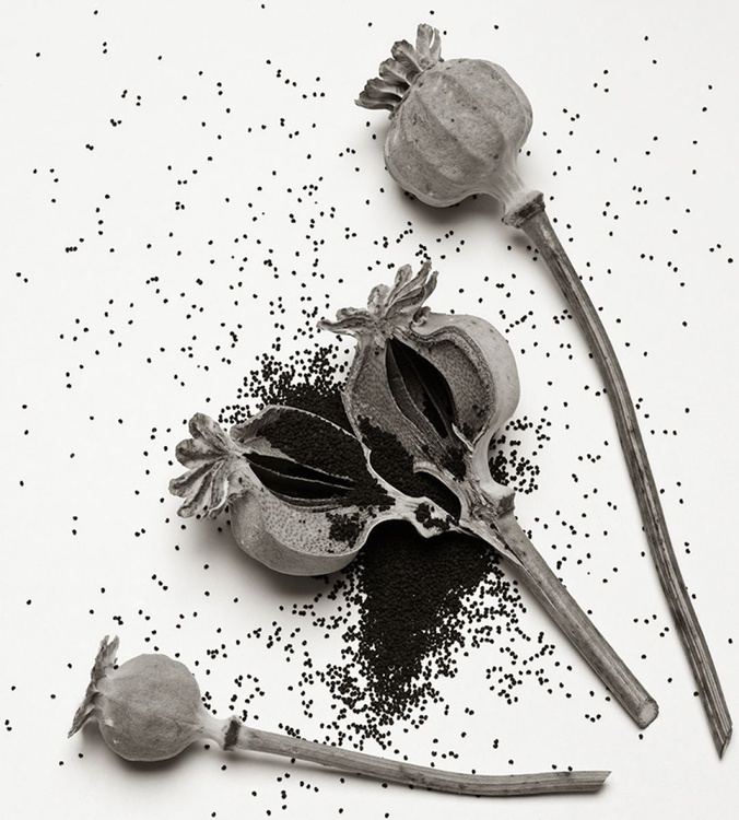 Poppy Heads And Seeds - Image 0