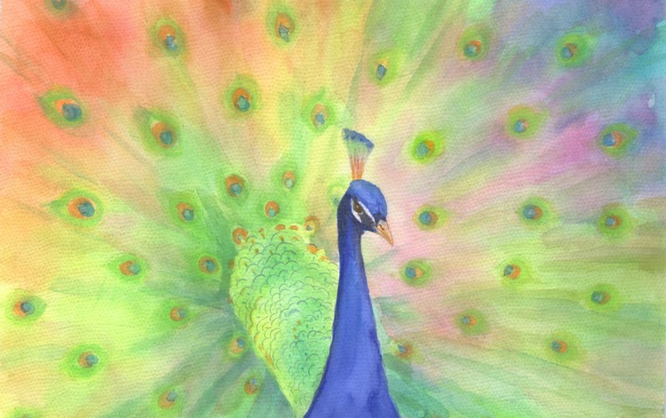 colorful peacock - Image 0