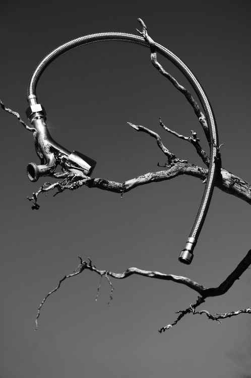 Old faucet and it branch -