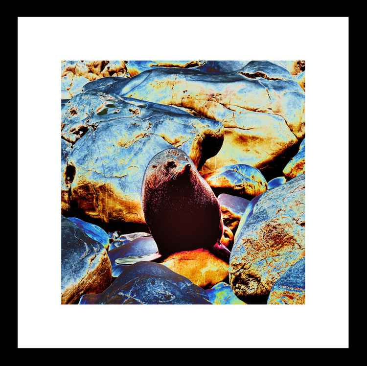 Natural Abstract - Seal on Rocks - Mini -