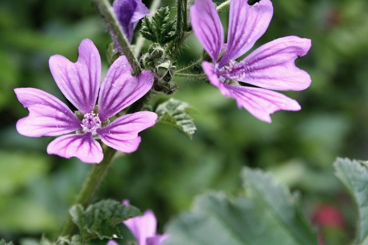 Purple Pollen - Image 0
