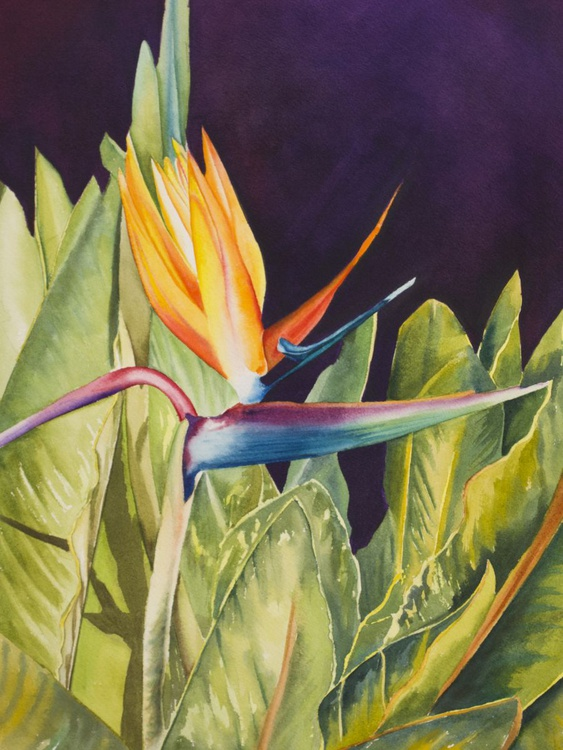 Bird of Paradise - Image 0