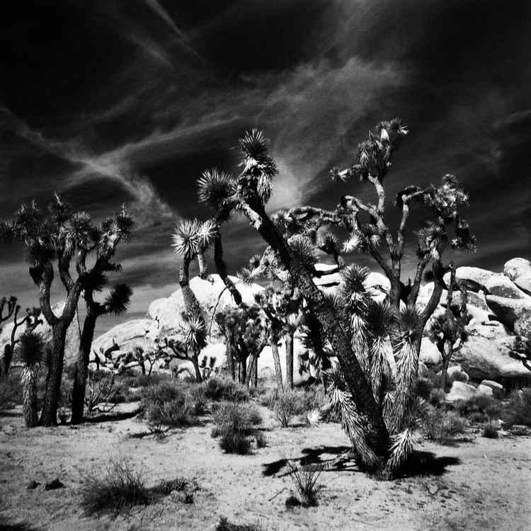 Desert Path -
