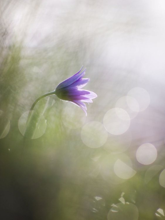 Flower in the light - Image 0