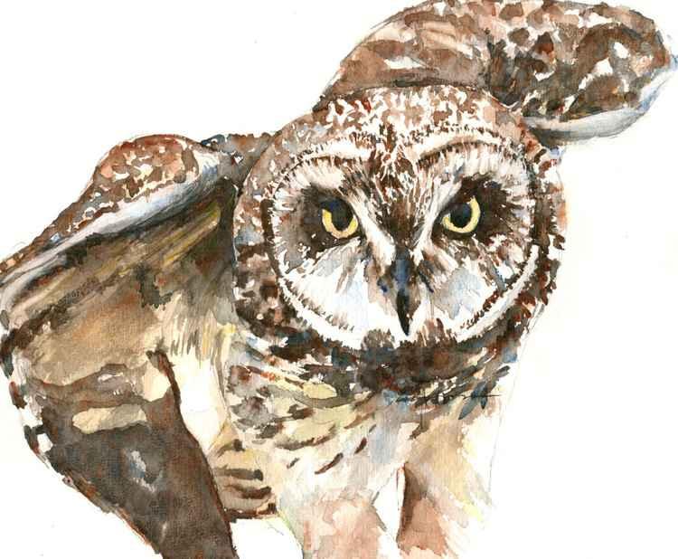 Pueo Hawaiian Owl