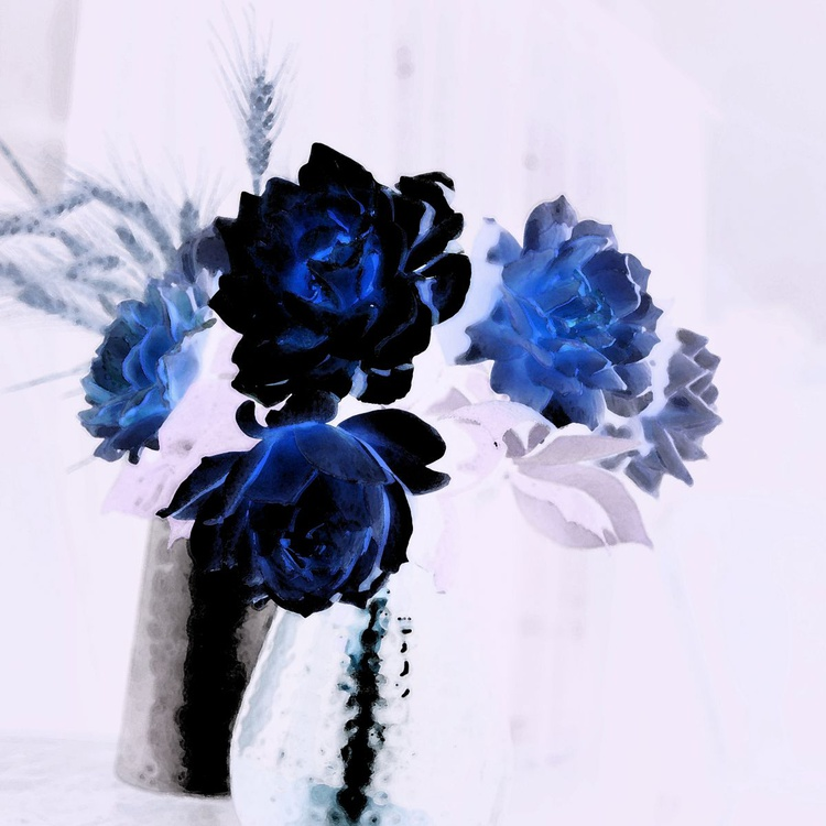 Blue roses - Image 0